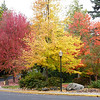 Lithia Park, Ashland, Oregon 2012 : Lithia Park is located in Ashland, Oregon, just North of the California border. The last 12 pix, starting with the ducks, are from my Iphone.